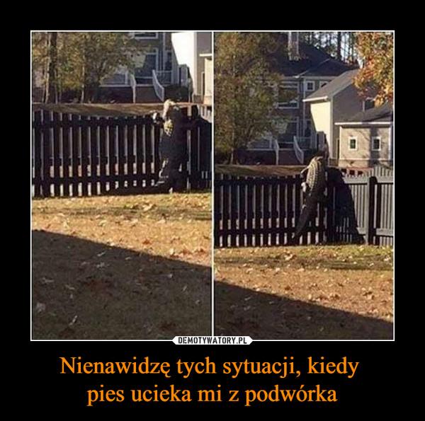 Nienawidzę tych sytuacji, kiedy pies ucieka mi z podwórka –