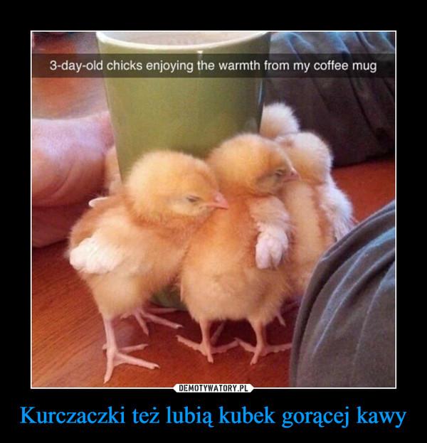 Kurczaczki też lubią kubek gorącej kawy –
