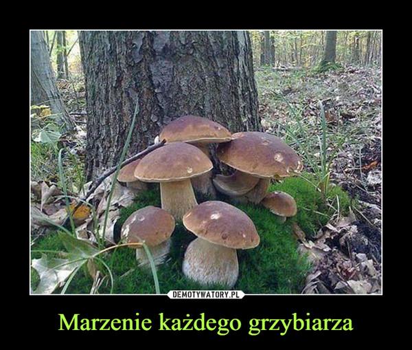 Marzenie każdego grzybiarza –