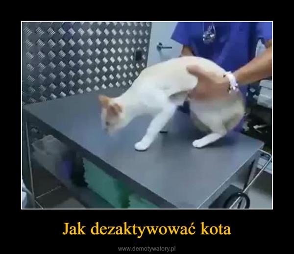 Jak dezaktywować kota –