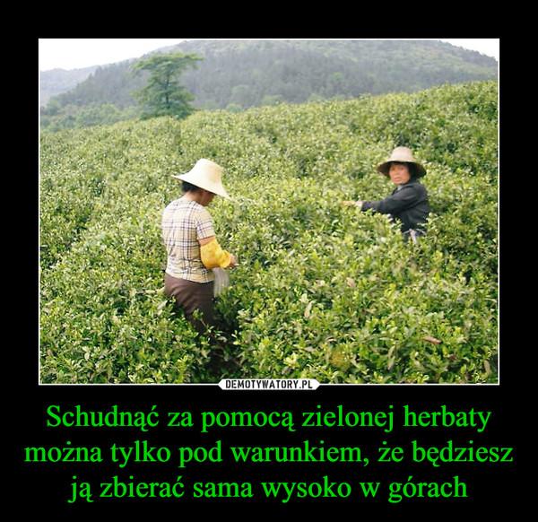 Schudnąć za pomocą zielonej herbaty można tylko pod warunkiem, że będziesz ją zbierać sama wysoko w górach –