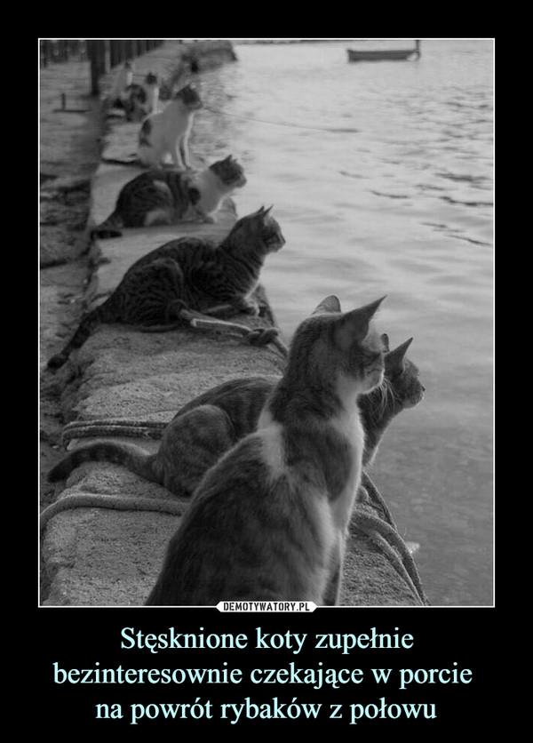 Stęsknione koty zupełnie bezinteresownie czekające w porcie na powrót rybaków z połowu –