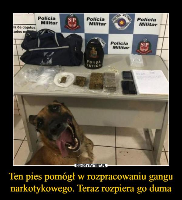 Ten pies pomógł w rozpracowaniu gangu narkotykowego. Teraz rozpiera go duma –