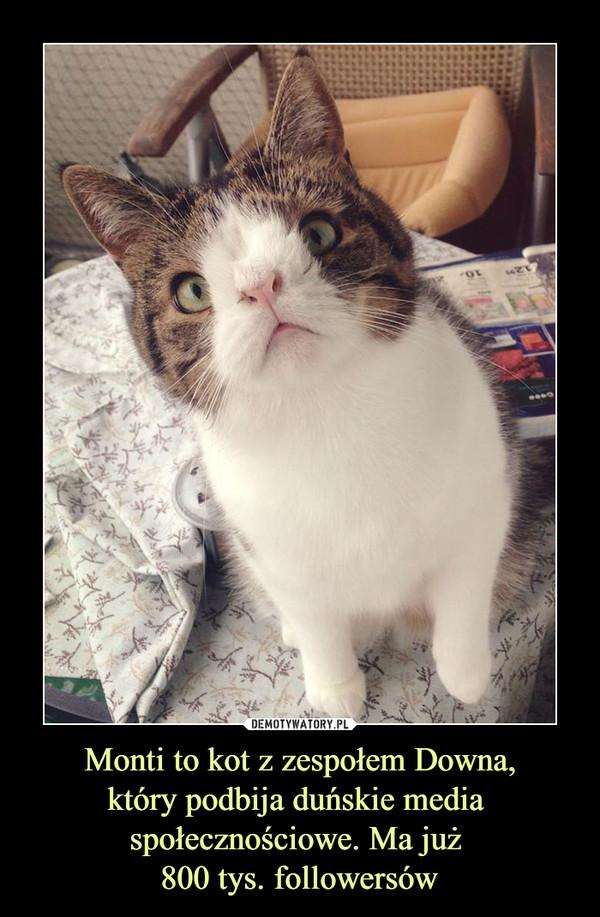 Monti to kot z zespołem Downa,który podbija duńskie media społecznościowe. Ma już 800 tys. followersów –