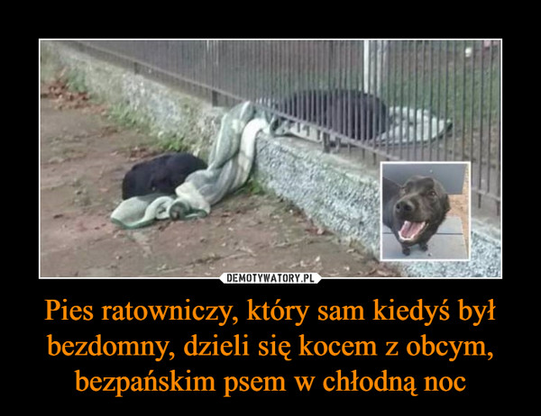 Pies ratowniczy, który sam kiedyś był bezdomny, dzieli się kocem z obcym, bezpańskim psem w chłodną noc –