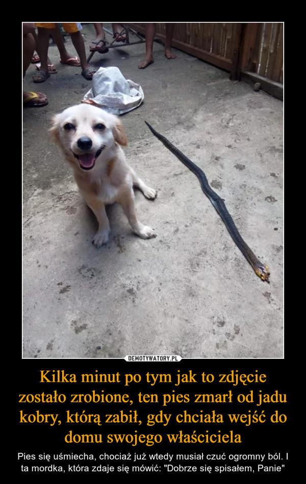 """Kilka minut po tym jak to zdjęcie zostało zrobione, ten pies zmarł od jadu kobry, którą zabił, gdy chciała wejść do domu swojego właściciela – Pies się uśmiecha, chociaż już wtedy musiał czuć ogromny ból. I ta mordka, która zdaje się mówić: """"Dobrze się spisałem, Panie"""""""