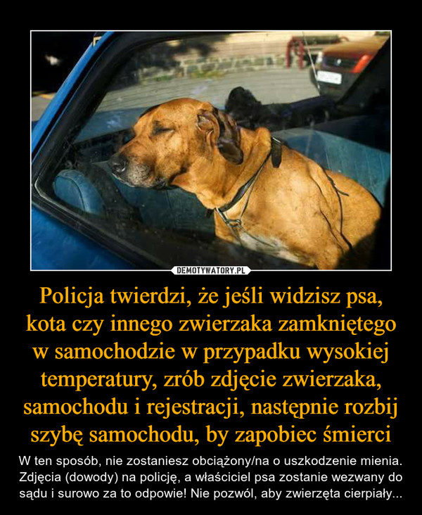 Policja twierdzi, że jeśli widzisz psa, kota czy innego zwierzaka zamkniętego w samochodzie w przypadku wysokiej temperatury, zrób zdjęcie zwierzaka, samochodu i rejestracji, następnie rozbij szybę samochodu, by zapobiec śmierci – W ten sposób, nie zostaniesz obciążony/na o uszkodzenie mienia. Zdjęcia (dowody) na policję, a właściciel psa zostanie wezwany do sądu i surowo za to odpowie! Nie pozwól, aby zwierzęta cierpiały...