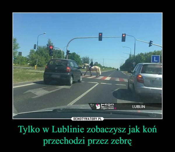 Tylko w Lublinie zobaczysz jak koń przechodzi przez zebrę –