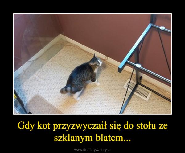 Gdy kot przyzwyczaił się do stołu ze szklanym blatem... –