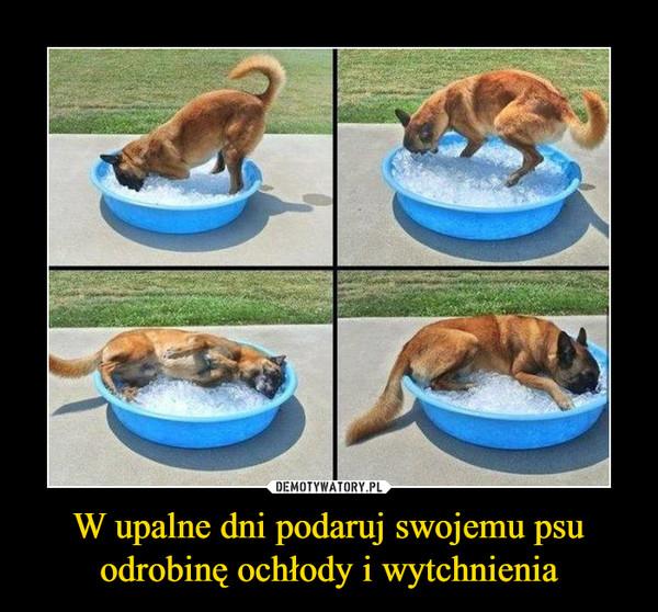 W upalne dni podaruj swojemu psu odrobinę ochłody i wytchnienia –