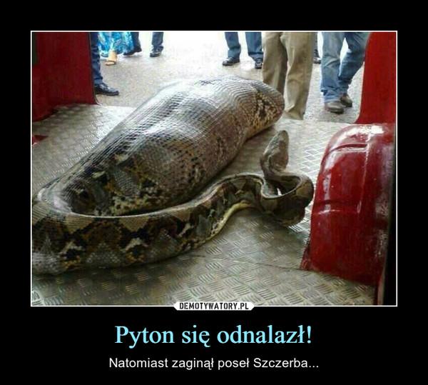 Pyton się odnalazł! – Natomiast zaginął poseł Szczerba...