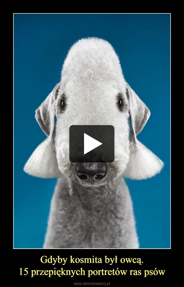 Gdyby kosmita był owcą.15 przepięknych portretów ras psów –