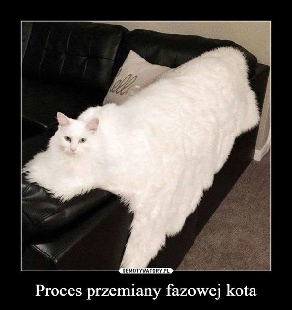 Proces przemiany fazowej kota –