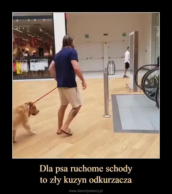 Dla psa ruchome schodyto zły kuzyn odkurzacza –