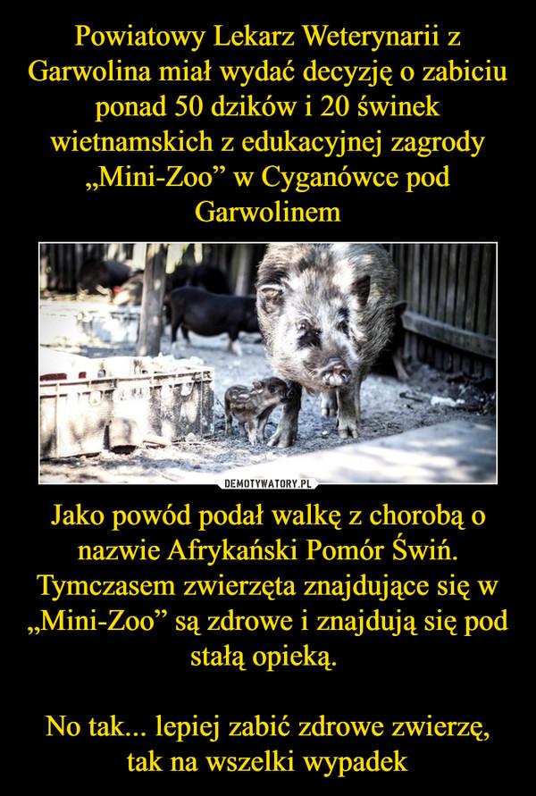 """Jako powód podał walkę z chorobą o nazwie Afrykański Pomór Świń. Tymczasem zwierzęta znajdujące się w """"Mini-Zoo"""" są zdrowe i znajdują się pod stałą opieką. No tak... lepiej zabić zdrowe zwierzę, tak na wszelki wypadek –"""