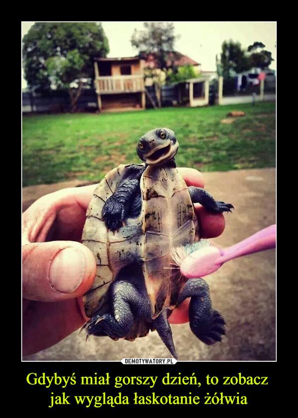 Gdybyś miał gorszy dzień, to zobacz jak wygląda łaskotanie żółwia –