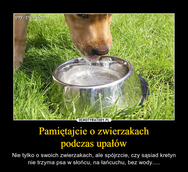 Pamiętajcie o zwierzakachpodczas upałów – Nie tylko o swoich zwierzakach, ale spójrzcie, czy sąsiad kretyn nie trzyma psa w słońcu, na łańcuchu, bez wody.....