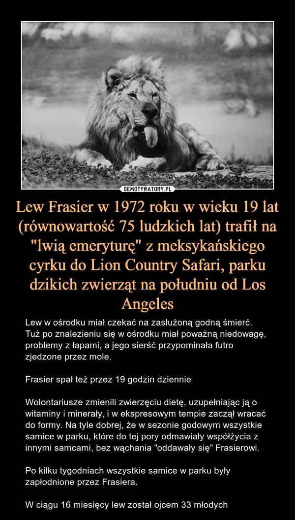 """Lew Frasier w 1972 roku w wieku 19 lat (równowartość 75 ludzkich lat) trafił na """"lwią emeryturę"""" z meksykańskiego cyrku do Lion Country Safari, parku dzikich zwierząt na południu od Los Angeles – Lew w ośrodku miał czekać na zasłużoną godną śmierć. Tuż po znalezieniu się w ośrodku miał poważną niedowagę, problemy z łapami, a jego sierść przypominała futro zjedzone przez mole. Frasier spał też przez 19 godzin dziennieWolontariusze zmienili zwierzęciu dietę, uzupełniając ją o witaminy i minerały, i w ekspresowym tempie zaczął wracać do formy. Na tyle dobrej, że w sezonie godowym wszystkie samice w parku, które do tej pory odmawiały współżycia z innymi samcami, bez wąchania """"oddawały się"""" Frasierowi.Po kilku tygodniach wszystkie samice w parku były zapłodnione przez Frasiera.W ciągu 16 miesięcy lew został ojcem 33 młodych"""