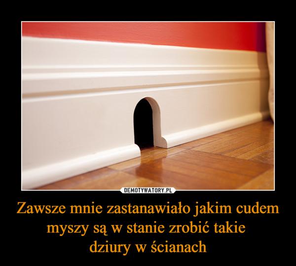 Zawsze mnie zastanawiało jakim cudem myszy są w stanie zrobić takie dziury w ścianach –