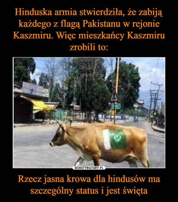 Rzecz jasna krowa dla hindusów ma szczególny status i jest święta –