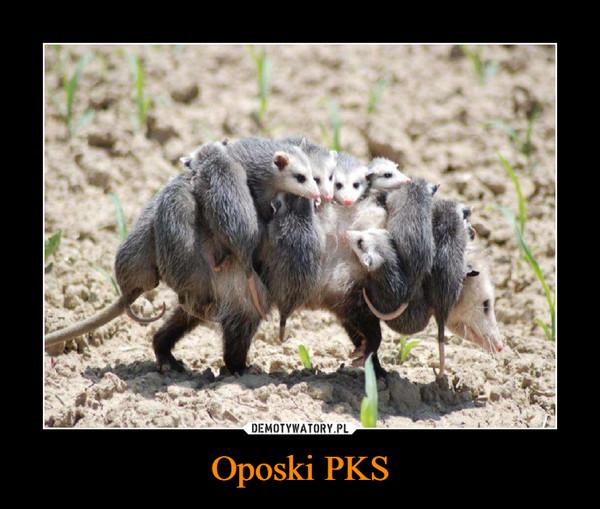 Oposki PKS –