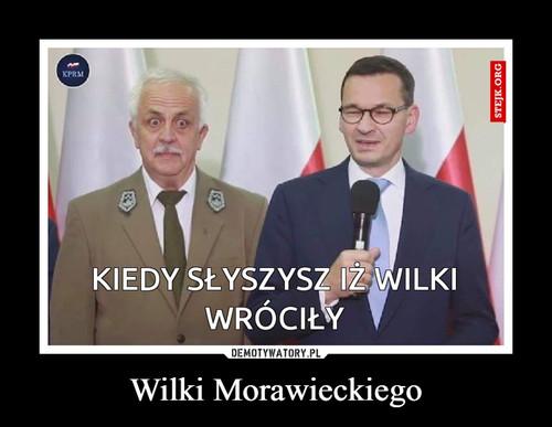 Wilki Morawieckiego