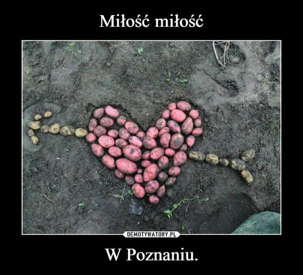 W Poznaniu. –