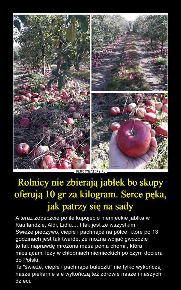 """Rolnicy nie zbierają jabłek bo skupy oferują 10 gr za kilogram. Serce pęka, jak patrzy się na sady – A teraz zobaczcie po ile kupujecie niemieckie jabłka w Kauflandzie, Aldi, Lidlu.... I tak jest ze wszystkim.Świeże pieczywo, ciepłe i pachnące na półce, które po 13 godzinach jest tak twarde, że można wbijać gwoździeto tak naprawdę mrożona masa pełna chemii, która miesiącami leży w chłodniach niemieckich po czym dociera do Polski. Te """"świeże, ciepłe i pachnące bułeczki"""" nie tylko wykończą nasze piekarnie ale wykończą też zdrowie nasze i naszych dzieci."""