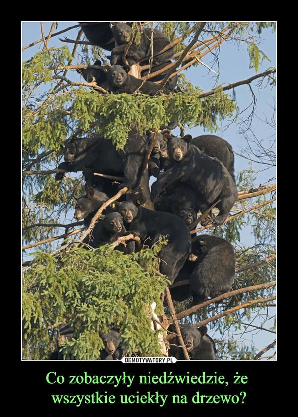Co zobaczyły niedźwiedzie, że wszystkie uciekły na drzewo? –