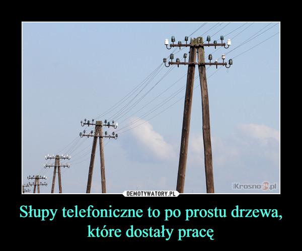 Słupy telefoniczne to po prostu drzewa, które dostały pracę –