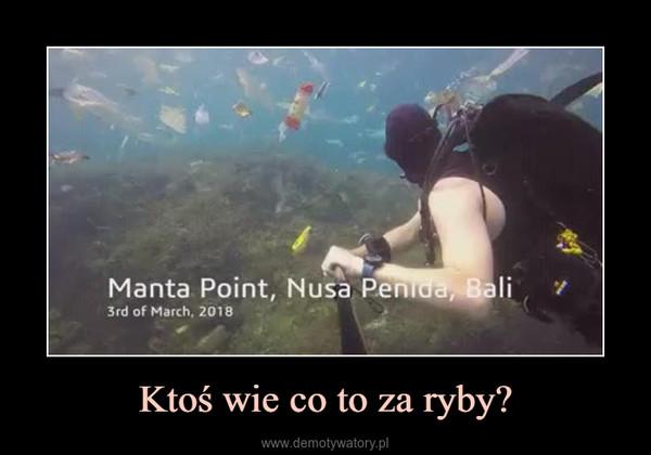 Ktoś wie co to za ryby? –