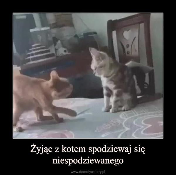 Żyjąc z kotem spodziewaj się niespodziewanego –