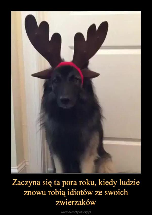 Zaczyna się ta pora roku, kiedy ludzie znowu robią idiotów ze swoich zwierzaków –