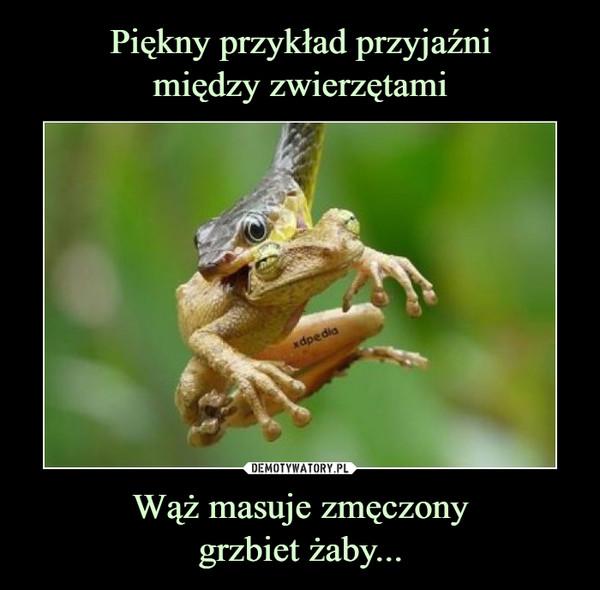 Wąż masuje zmęczonygrzbiet żaby... –