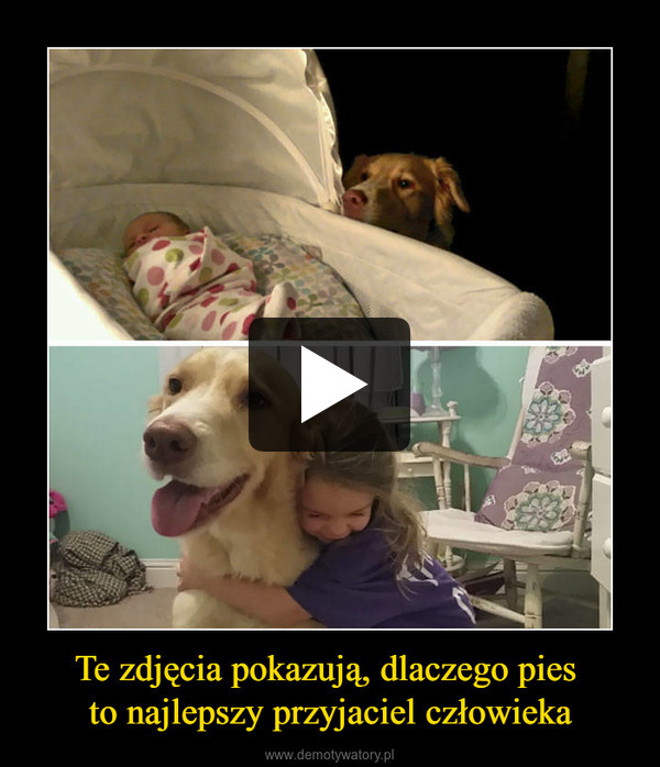 Te zdjęcia pokazują, dlaczego pies to najlepszy przyjaciel człowieka –