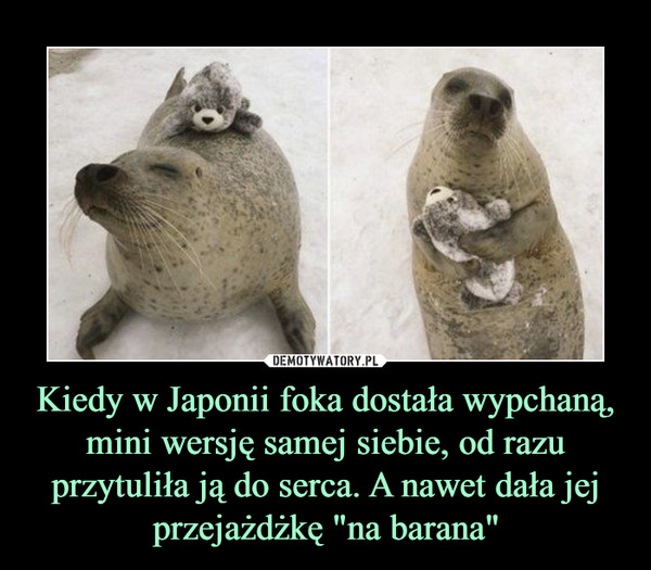 """Kiedy w Japonii foka dostała wypchaną, mini wersję samej siebie, od razu przytuliła ją do serca. A nawet dała jej przejażdżkę """"na barana"""" –"""