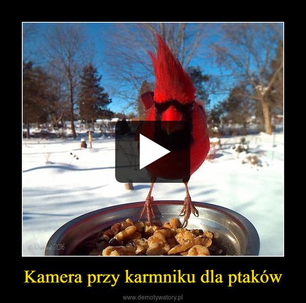 Kamera przy karmniku dla ptaków –