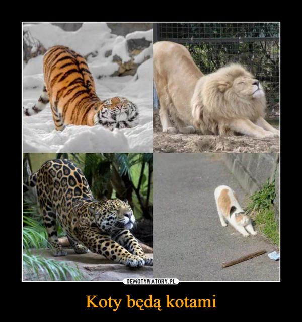 Koty będą kotami –