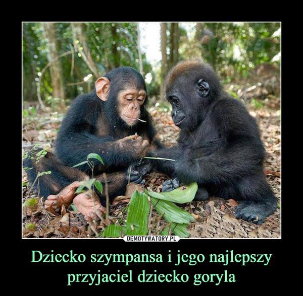 Dziecko szympansa i jego najlepszy przyjaciel dziecko goryla –