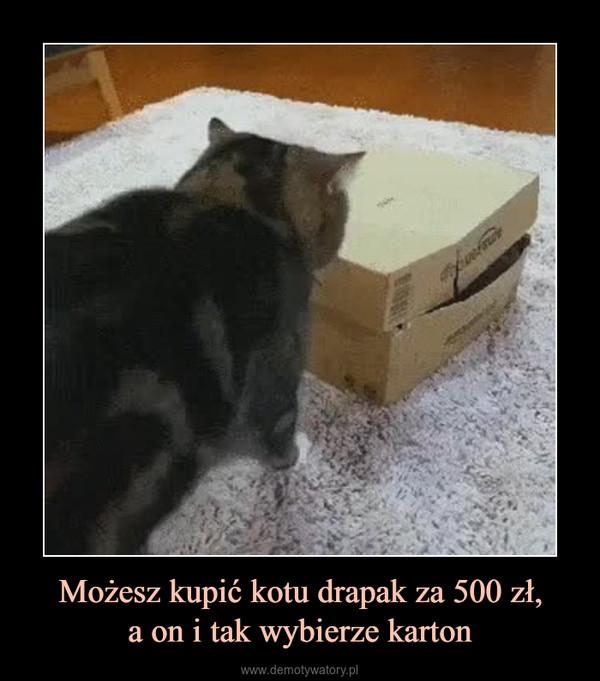 Możesz kupić kotu drapak za 500 zł,a on i tak wybierze karton –