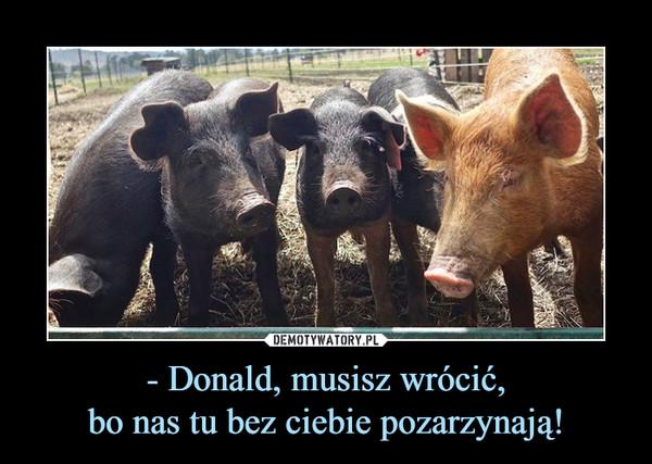 - Donald, musisz wrócić,bo nas tu bez ciebie pozarzynają! –