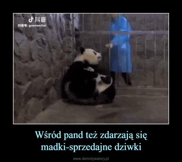 Wśród pand też zdarzają się madki-sprzedajne dziwki –