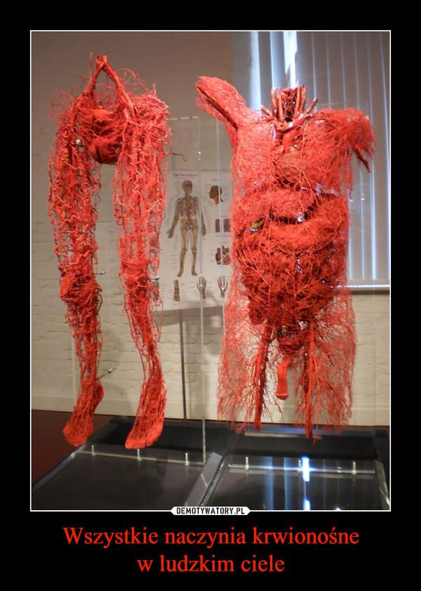 Wszystkie naczynia krwionośnew ludzkim ciele –