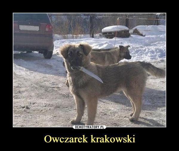 Owczarek krakowski –