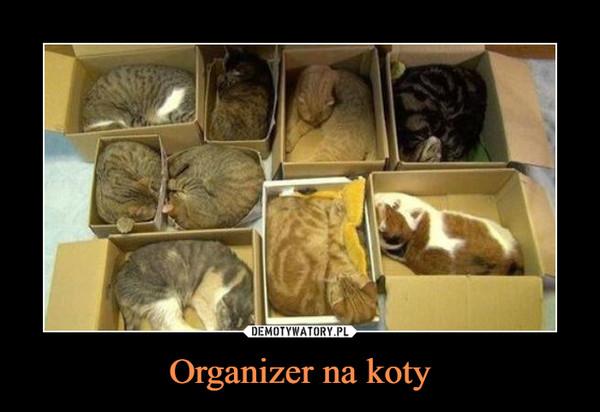 Organizer na koty –