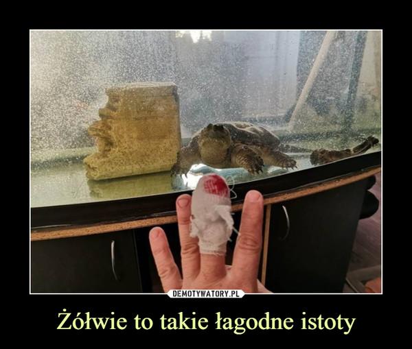 Żółwie to takie łagodne istoty –
