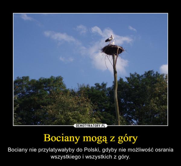 Bociany mogą z góry – Bociany nie przylatywałyby do Polski, gdyby nie możliwość osrania wszystkiego i wszystkich z góry.