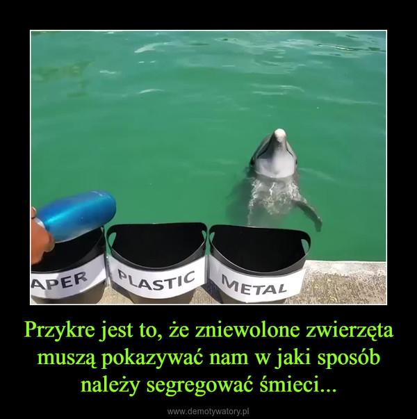 Przykre jest to, że zniewolone zwierzęta muszą pokazywać nam w jaki sposób należy segregować śmieci... –