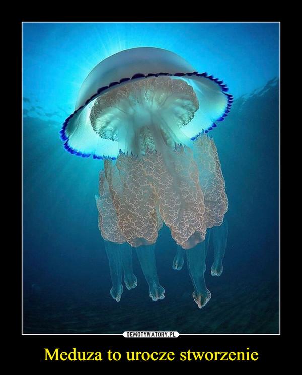 Meduza to urocze stworzenie –