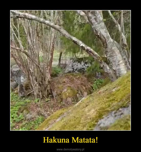 Hakuna Matata! –
